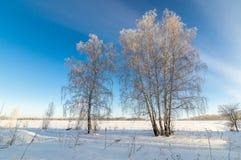 Panorama van sneeuwhout, weg, Rusland, Ural Royalty-vrije Stock Afbeeldingen