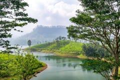 Panorama van theeaanplanting, Sri Lanka royalty-vrije stock afbeeldingen