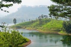 Panorama van theeaanplanting, Sri Lanka royalty-vrije stock afbeelding