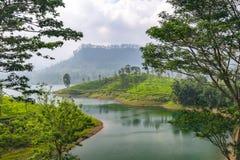 Panorama van theeaanplanting, Sri Lanka stock afbeeldingen