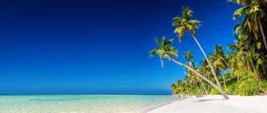 Panorama van tropisch eiland met kokosnotenpalmen op zandige bea Royalty-vrije Stock Fotografie