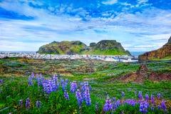 Panorama van Vestmannaeyjar-stad op Westman-Eilanden IJsland Royalty-vrije Stock Fotografie