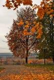 Panorama van Vladimir-stad, Rusland De aard van de herfst Lange schaduwen en blauwe hemel royalty-vrije stock foto