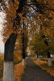 Panorama van Vladimir-stad, Rusland De aard van de herfst Lange schaduwen en blauwe hemel royalty-vrije stock foto's