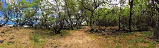 Panorama van wandelingsweg door Ruïnes van het oude Complexe Dorp van dorpsmaonakala, Kualapa-Cluster Stock Foto's