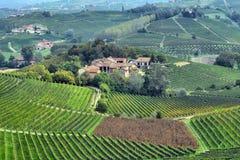 Panorama van wijngaarden Stock Foto's
