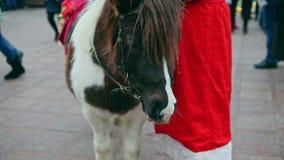 Panorama van witte en bruine poney op Kerstmisfee stock video