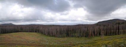 Panorama van Yellowstone stock foto's