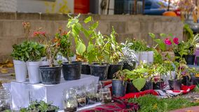 Panorama Variety of lush potted plants and flowers at the garden of a home. Bright sunlight beams down on the plants and ground with grasses and fallen brown royalty free stock photos