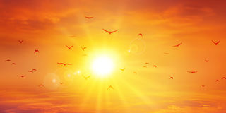 Panorama- varm solnedgång Royaltyfri Bild