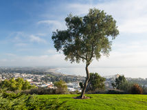 Panorama of Ventura from Grant Park Royalty Free Stock Photos