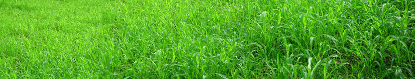 Panorama verde Fotografia de Stock Royalty Free