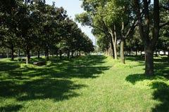 Panorama verde de los árboles Fotos de archivo libres de regalías