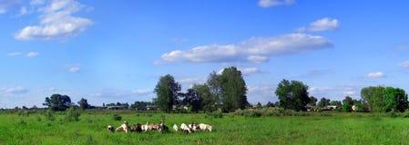 Panorama verde del campo Fotografie Stock Libere da Diritti