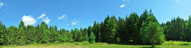 Panorama verde della foresta Fotografie Stock