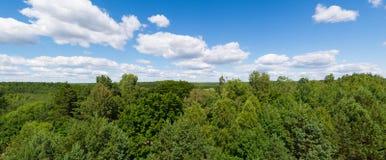 Panorama verde della foresta Immagini Stock Libere da Diritti