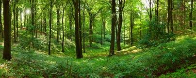 Panorama vert de forêt Photos libres de droits