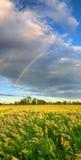 Panorama vertical com arco-íris fotos de stock royalty free
