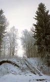 Panorama verticale di vecchia scala in foresta nevosa Fotografia Stock