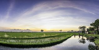 Panorama of very vast, broad, extensive, spacious rice field, streched into the horizon. Behind it is a line of hills and mountains that also expansive Stock Image