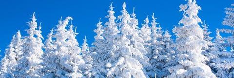 Panorama vibrante del fondo de las vacaciones del invierno con los árboles de pino cubiertos por las nevadas fuertes Imagen de archivo libre de regalías