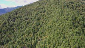 Panorama view aerial drone of coniferous pine forest in early autumn in Taiwan. Panorama view aerial drone of coniferous pine forest in early autumn season in stock video footage