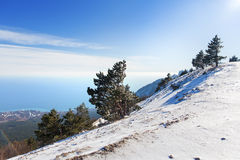 Panorama view from Ai-Petri mountain. Snow and iced pine trees Royalty Free Stock Image