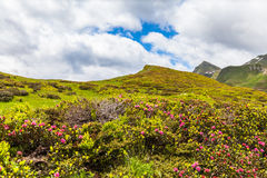 Panorama view of the Alps in Ticino Royalty Free Stock Photos