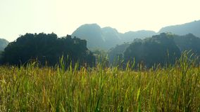 Panorama view of beautiful karst scenery. Wetlands and rice paddy fields at sunset in Tam Coc, Ninh Binh Province, Vietnam stock footage