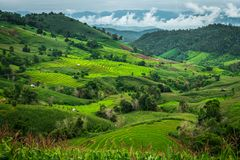 Panorama view of rice terraces at Bong Piang forest in Chiang Mai, Thailand. Panorama view of a beautiful rice terraces at Bong Piang forest in Chiang Mai Royalty Free Stock Images