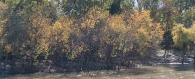 Panorama view beautiful riverside fall foliage vibrant color trees in suburban Dallas, Texas, USA. stock photography