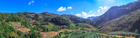 Panorama view of beautiful tea farm on a mountain hill at afternoon at Angkhang. Royalty Free Stock Photos