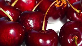 Panorama view of cherry berries stock video footage