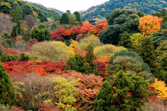 Panorama view of colorful trees. Of mountain in Kyoto, Japan royalty free stock image