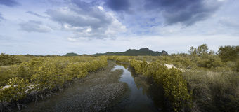 Panorama view of crack earth and dry water among mangrove forest with blue sky, clouds and long mountain in background Stock Photos