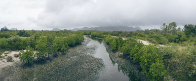 Panorama view of crack earth and dry water among mangrove forest with sky, rainy clouds float on top of big and long mountain Royalty Free Stock Photos