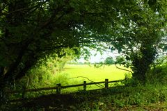 Panorama. View of the field and beautiful bushes Royalty Free Stock Images