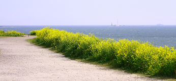 Panorama View Of Finland Gulf. With yellow flowers in the foreground, Suomenlinna Sveaborg Helsinki Royalty Free Stock Images