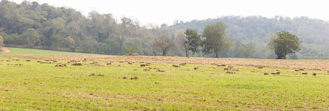 Panorama view of green fields in farmland Stock Photo