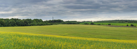 Panorama view of green and yellow field with forest behind Stock Photos