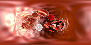 Panorama view inside blood vessel Stock Photo