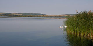 Panorama view from Kis(s) Balaton in Hungary Royalty Free Stock Photo