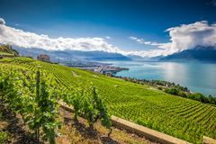 Panorama view of Montreux city with Swiss Alps, lake Geneva and vineyard on Lavaux region, Canton Vaud, Switzerland, Europe.  stock photography