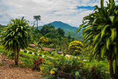 Panorama view of the mountains in the horizon. The landscape on the island of Borneo. Sabah, Malaysia. stock photo