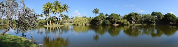 Panorama view of  Palm trees Stock Images