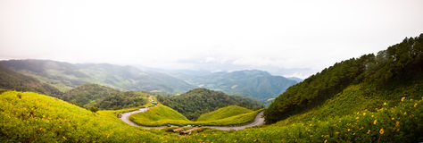Panorama of view point Tung Bua Tong. View point Tung Bua Tong (Mexican sunflower) in Maehongson Province Thailand Royalty Free Stock Images