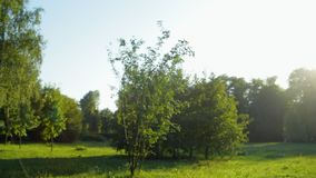 Panorama view of a summer park stock footage