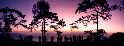 Panorama view on sunrise background. Panorama view on sunset background. Silhouette trees on sunrise background Stock Photo