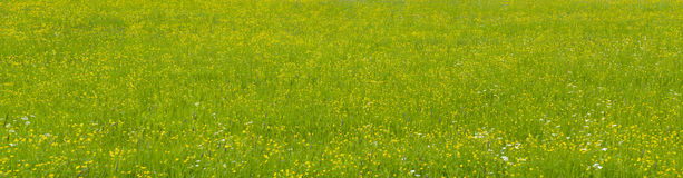 Panorama view to green meadow Royalty Free Stock Photography