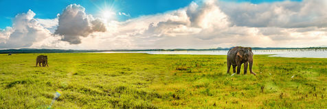 Panorama view with two elephants Royalty Free Stock Photos